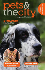 Pets And The City - Pets And The City