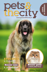 Pets And The City - Pets And The City - Dicembre